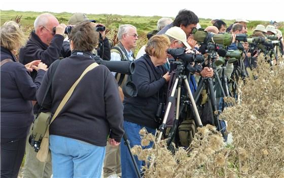 Norfolk Coast Bird Watching